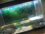 Аквариум 90 литров с двумя черепашками